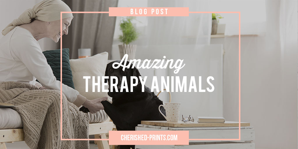 Amazing-Therapy-Aminals-Blog-Post Banner